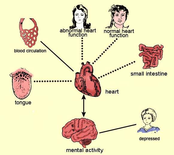 bladder function